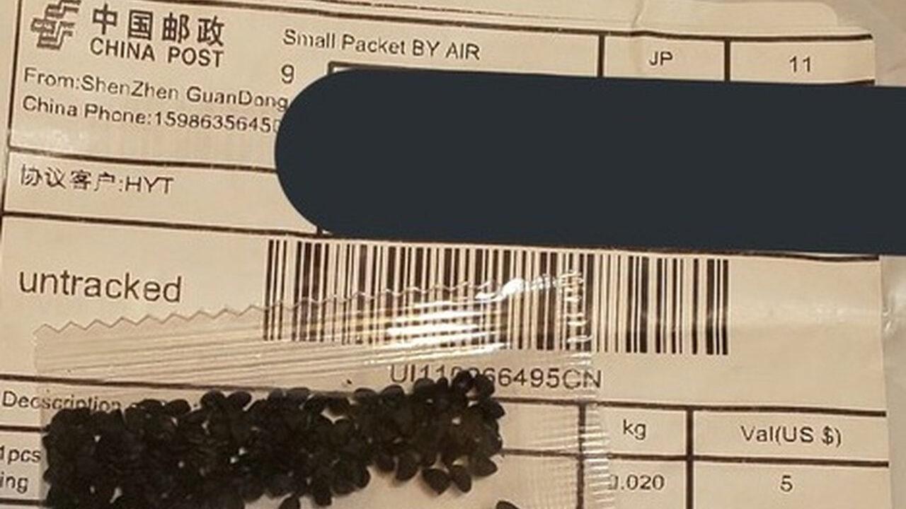 中国から謎の種届いたやつ