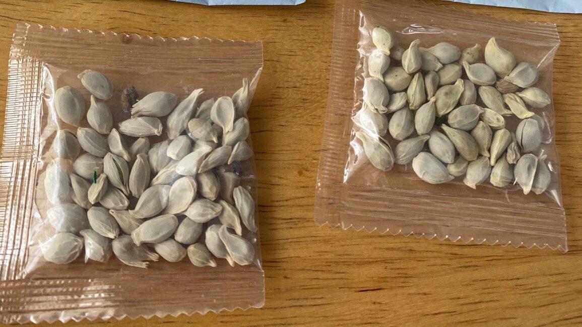 中国さん、コロナの次は侵略的外来種の種子を各国に郵送するバイオテロを決行してしまう
