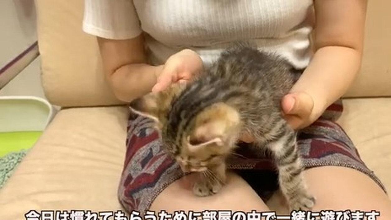 と 猫 幸せ を 女子 干物 呼ぶ