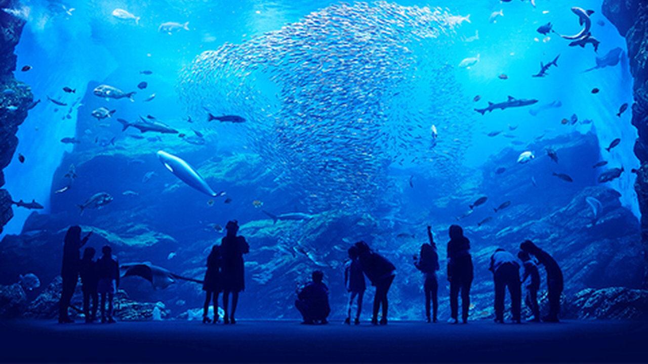 水族館(一日潰せます、2000円です、静かでデートに最適です)←こいつが流行らない理由w