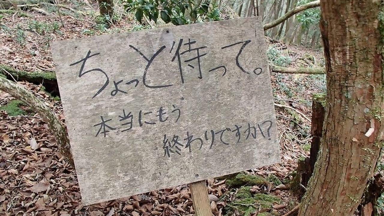 【悲報】樹海、自殺者に厳しかった