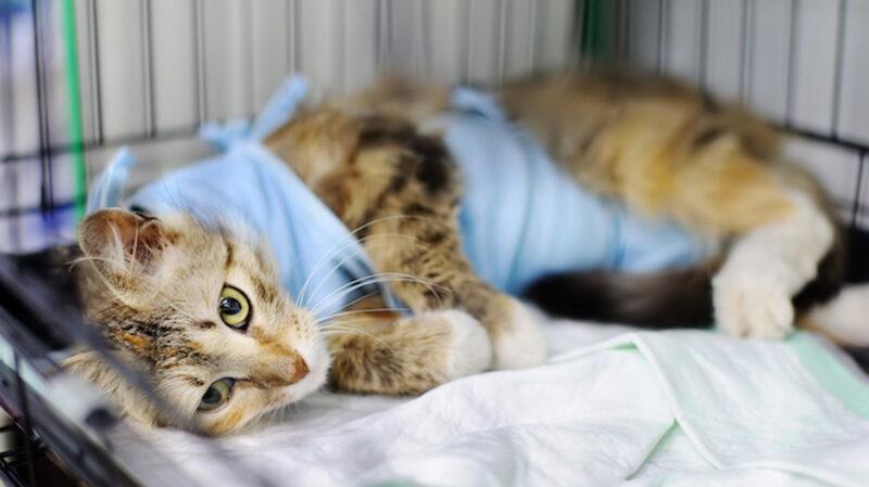 うちのネッコ、今から避妊手術のため入院生活