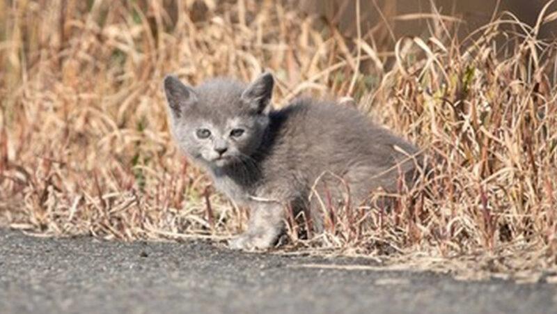 【緊急】今日野良猫の子猫居たんだが飼ってもええんか?