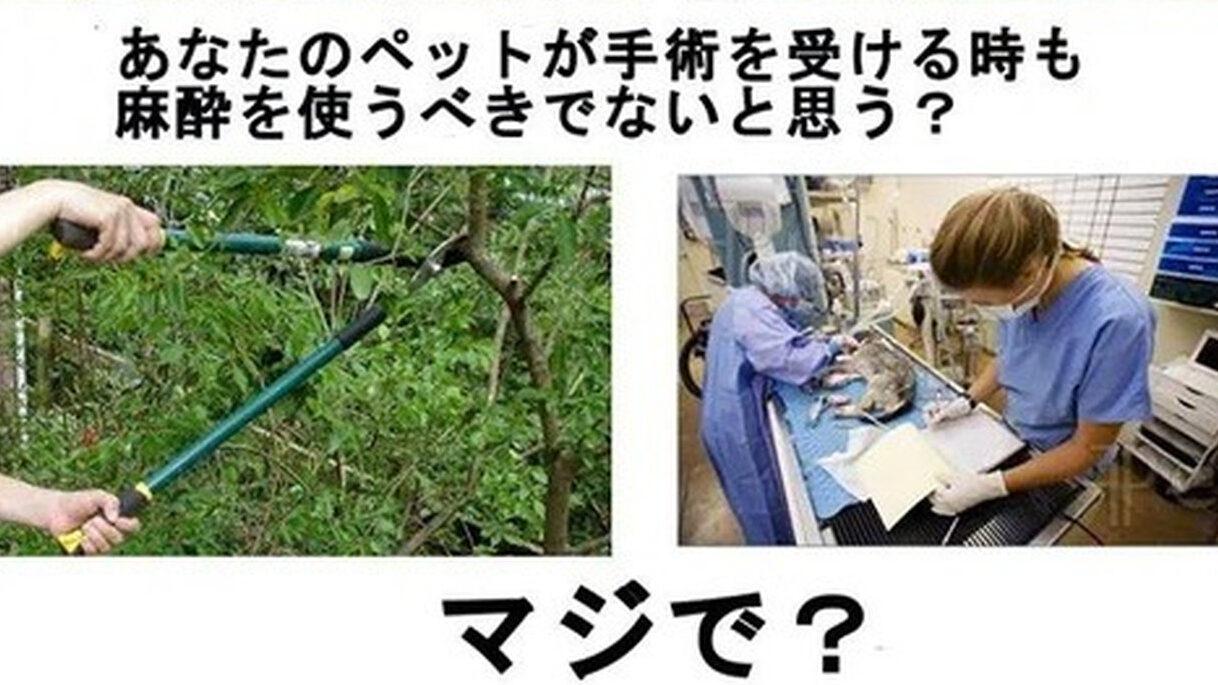 【悲報】ヴィーガンさん、「植物はいいのか論」を完全に論破