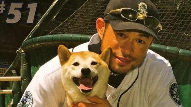 【悲報】イチローの愛犬、一弓亡くなっていた