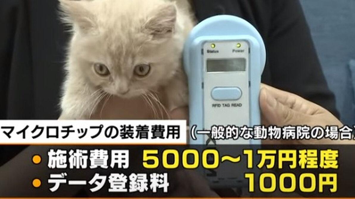 【朗報】小泉進次郎、犬や猫の遺棄を防ぐためにマイクロチップの義務化 2022年6月から
